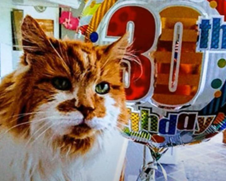 longevity-cat