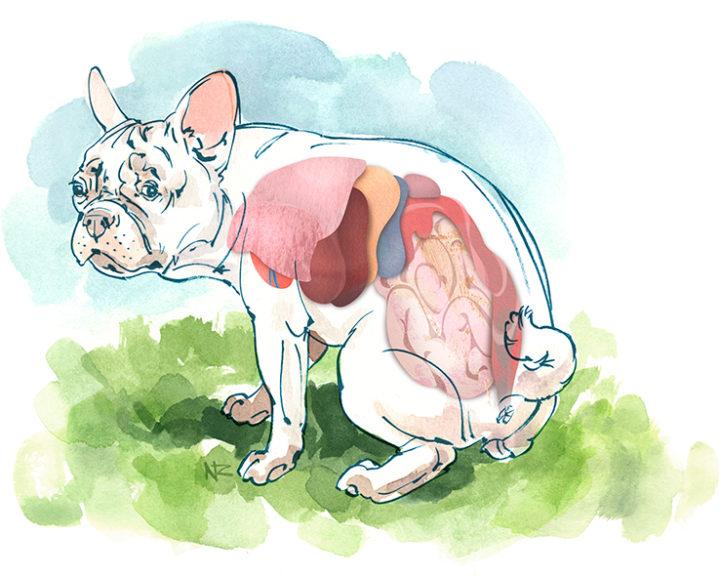 pet-intestine