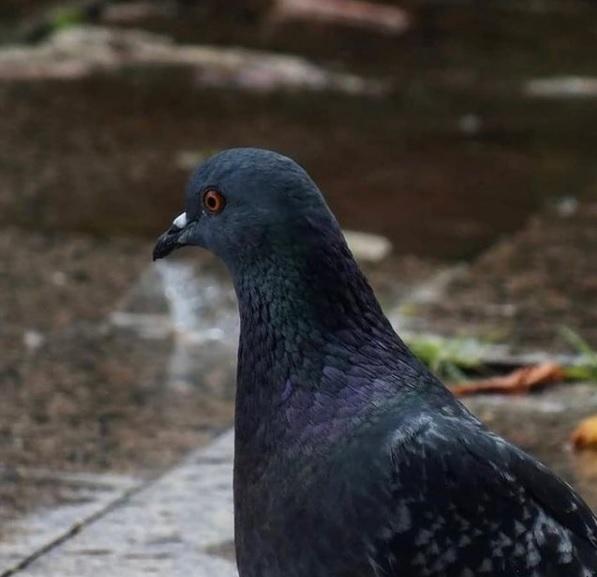 animalnutritionals-birds